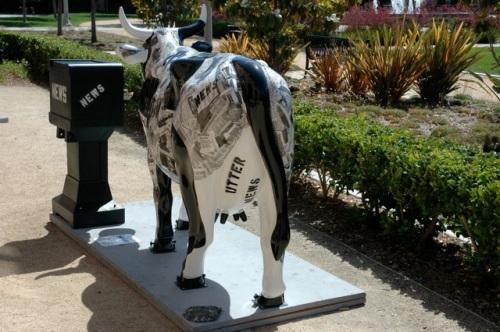 cow news